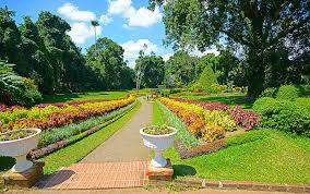 The Royal Botanic Gardens 50 Photos Of Royal Botanical Gardens Sri Lanka Places Boomsbeat