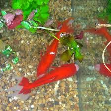 mini 3d aquarium or indoor pond