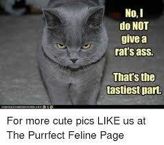 Rats Ass Meme - no i do not give a rats ass that sthe tastiest part for more cute