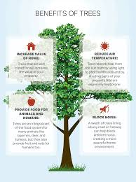 Value Of Home by How To Choose A Tree For Your Yard Or Garden U2013 Ereplacementparts
