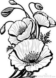 california poppy awesome drawing of california poppy coloring