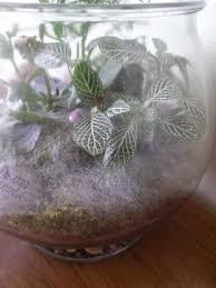 ask a question forum mold in my terrarium garden org