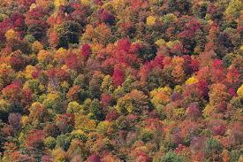 kancamagus highway ultimate hampshire fall foliage