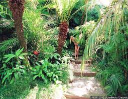 tropical paradise even in san francisco you can create a lush