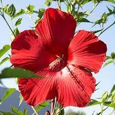 Texas Vegetable Garden Calendar by Planting Calendars When To Plant North Texas Vegetable Garden