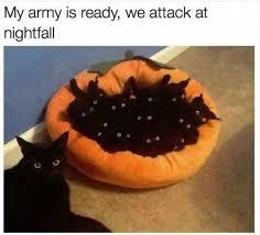 Lol Cat Meme - my army is ready we attack at nightfall black cat cat cat lady