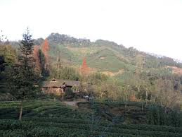 native plants in china to rural communities offer a new opportunity to restore china u0027s