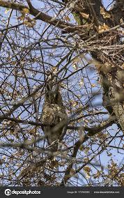 owl hiding in a tree stock photo remusrigo 173162090