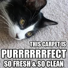 Carpet Cleaning Meme - friday funnies carpet cleaning memes carpet cleaning professional