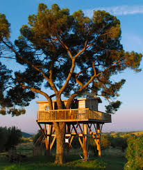 Incredible Houses Treehouse Gallery Dwellinggawker