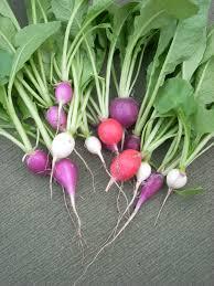 Plant Nanny Wiki Radish Wikipedia