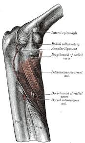 The Human Anatomy Muscles 131 Best Anatomy Images On Pinterest Health Health Fitness And