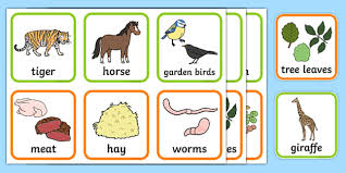 animals and what they eat matching cards animal matching