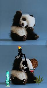 Gangster Baby Meme - gangster baby panda by orangeyouglad meme center