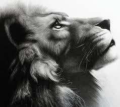 lion drawing bajan art 2281