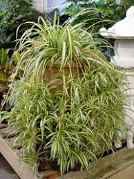 best indoor plants for low light best indoor plants thrive with low light and less water preen