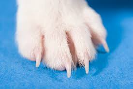 boxer dog feet how to remove stains from dog paws cuteness