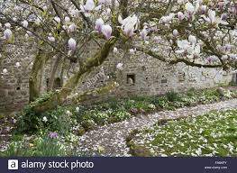 path under old magnolia tree in walled garden with bee boles in