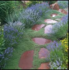 Backyard Ground Cover Ideas Garden Ground Cover Ideas