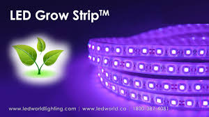 cheap led light strips led grow strip for plant production youtube