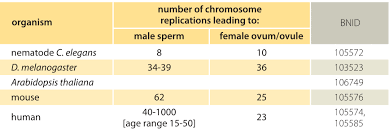 How Many Chromosomes Does A Somatic Cell Have How Many Chromosome Replications Occur Per Generation