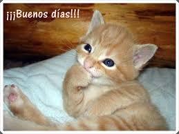 imagenes de gatitos sin frases lindos gatitos con frases lindas de buenos dias en imágenes