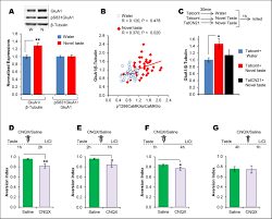 a molecular mechanism underlying gustatory memory trace for an
