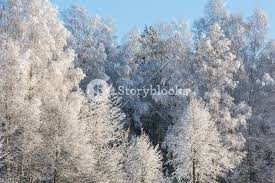 beautiful up of frosted or covered by snow trees branches in