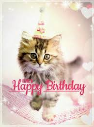Happy Kitten Meme - happy birthday pinteres