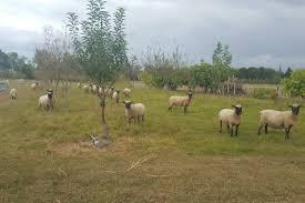 chambre agriculture drome dans la drôme l agriculture bio encore en recherche de