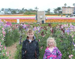carlsbad flower garden the best time to visit the flower fields in carlsbad socal field