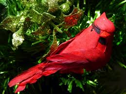 red cardinal in xmas tree free stock photo public domain pictures