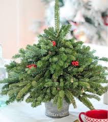 Live Decorated Tabletop Christmas Trees Delivered 118 best tabletop christmas tree ideas for all seasons images on