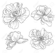 free flower drawings arst info