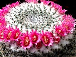 wonderful cactus flowers for you