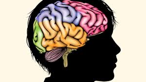 poverty may affect the growth of children u0027s brains science aaas