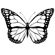 butterfly drawing black and white black and white butterfly tattoo