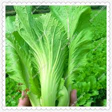creative of vegetable garden pests and diseases identifying 5