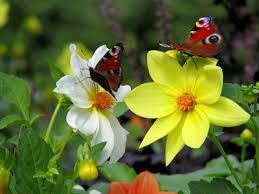 butterfly garden ideas howstuffworks