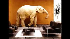 elephant living room the elephant in the living room alcoholism al anon interview with