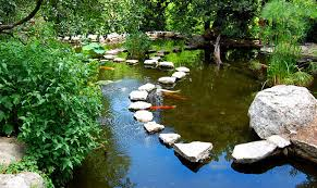 top 10 reasons to build a pond or water garden petcha