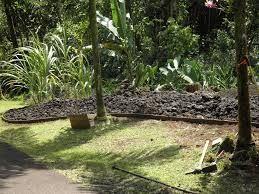 hawaii native plants department of hawaiian home lands homesteaders plant native