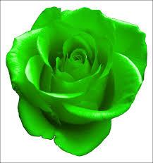 green roses physics green roses