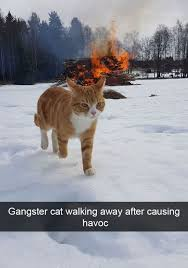 Like A Boss Know Your Meme - cat walking like a boss the best cat 2018