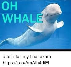 Whale Meme - 25 best memes about oh whale oh whale memes
