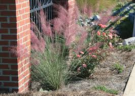 The Summer And Winter Garden - use gulf muhly grass for winter looks color mississippi state