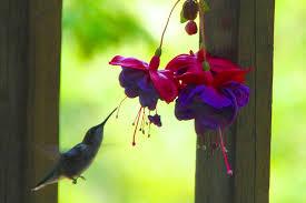 Hummingbird Flowers A Few Of My Favorite Birds 10 The Tiny But Powerful Hummingbird