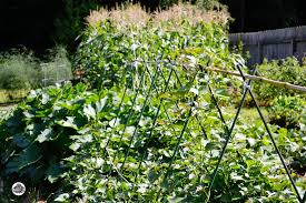 Fall Vegetable Garden Plants by Fall Vegetable Garden Plants Zandalus Net