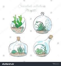 set four floral compositions succulents cactus stock vector