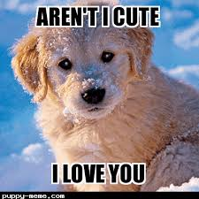 Cute Puppies Meme - puppy